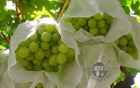 Birdspun grape protection